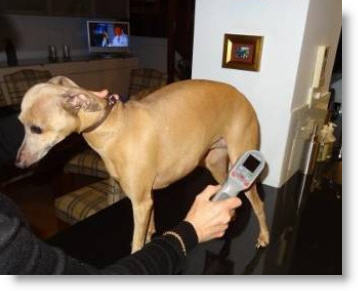 Cold Laser Therapy For Dogs And Companion Pets